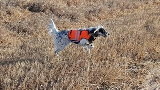 Veterans Pheasant hunt